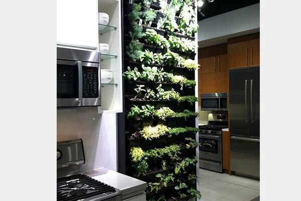 vertical herb garden in your kitchen for the home