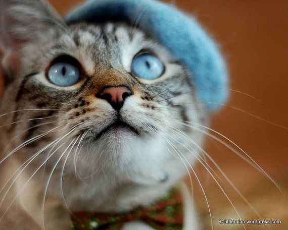 Cat French Beret - Wool Beret for Cats and Dogs - Hand ...