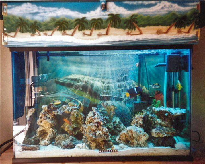 Beautiful Fish tank therapy Pinterest