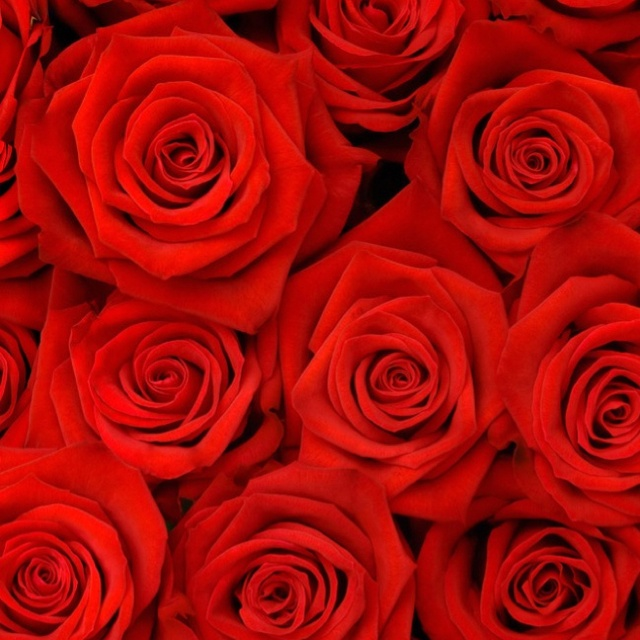 valentine flowers houston