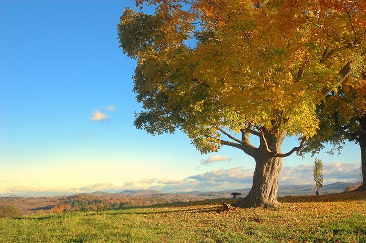 New England fall | pic...
