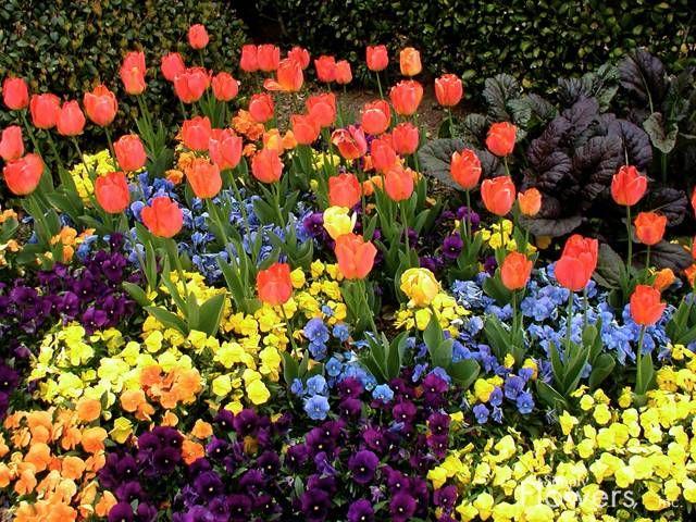 Fall Winter Southern Flowers Flower Garden Ideas Pinterest