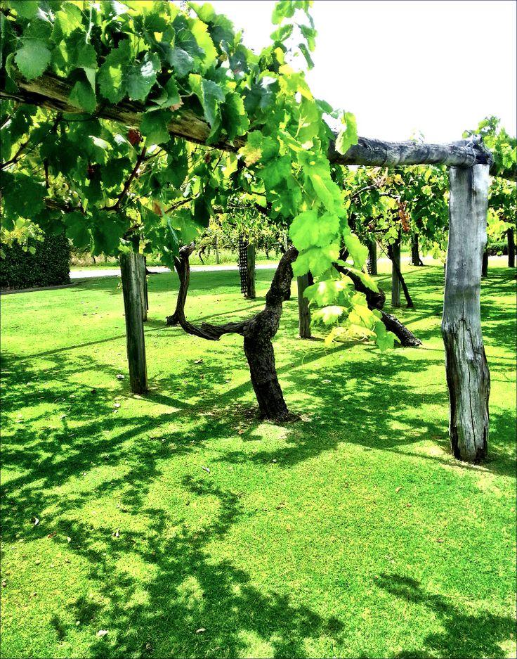 vines perth
