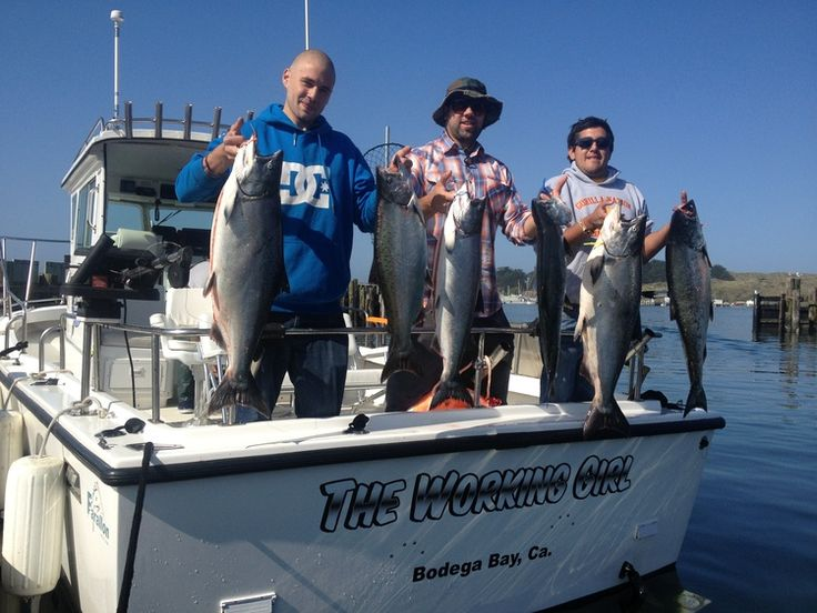 Pin by norcal sportfishing adventures on norcal for Bodega bay fishing charters