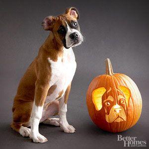 Dog-Breed Pumpkin Stencils: LOL Outtakes - Better Homes