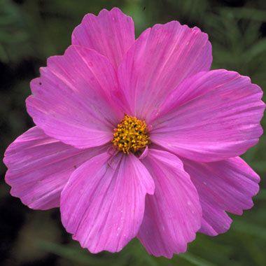 Flowers That Can Take The Heat Secret Garden Pinterest