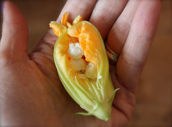 Cheese Stuffed Zucchini Flowers - Recipe - 3 ( For Cindy. Save the ...