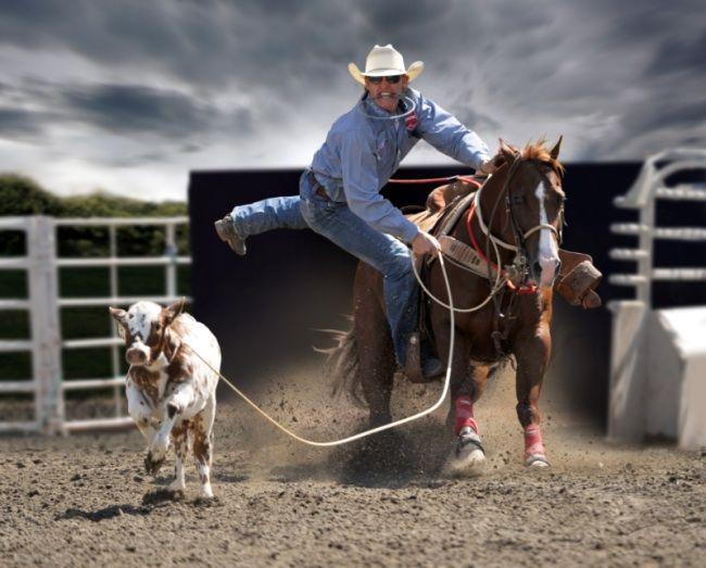 Tuf Coopers calf horses
