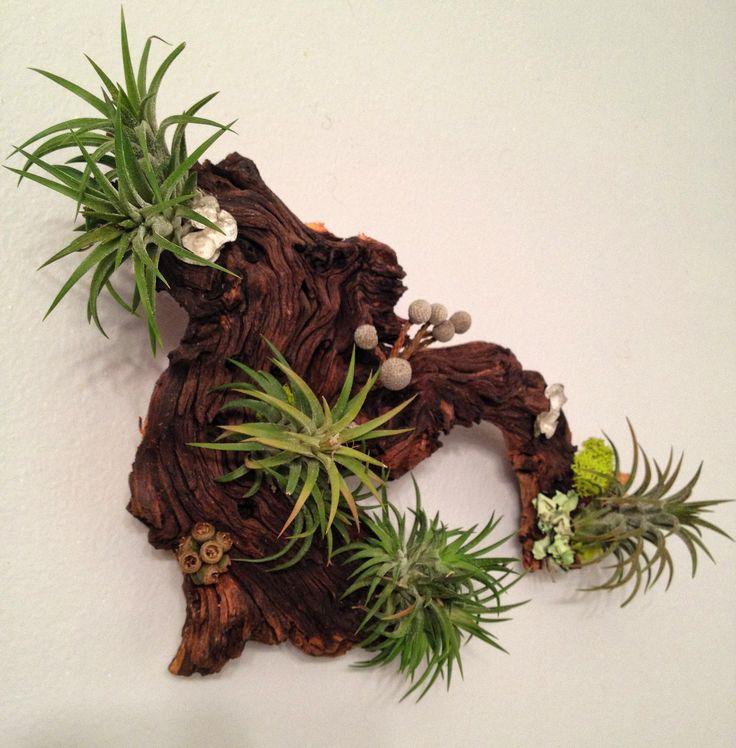 air plants identification air plants deco fabulous pinterest. Black Bedroom Furniture Sets. Home Design Ideas
