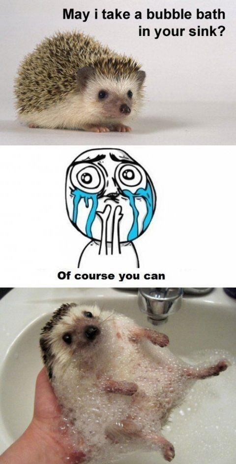 Hedgehog Bubble Bath | cute | Pinterest - 61.9KB
