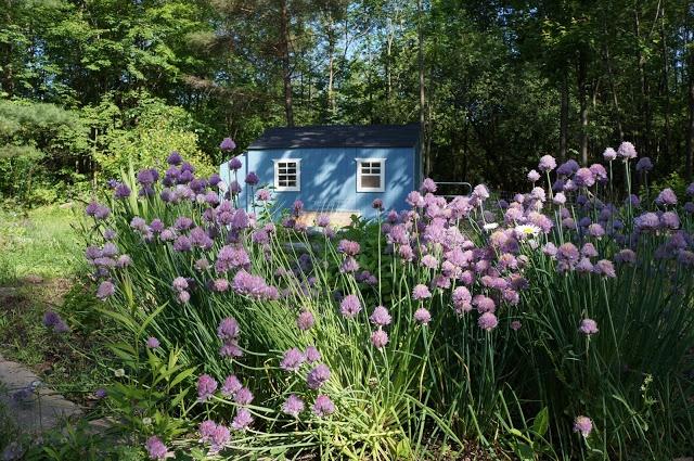 Suburban Backyard Farming : The Backyard Farming Connection  SuburbanUrban Farms  Pinterest