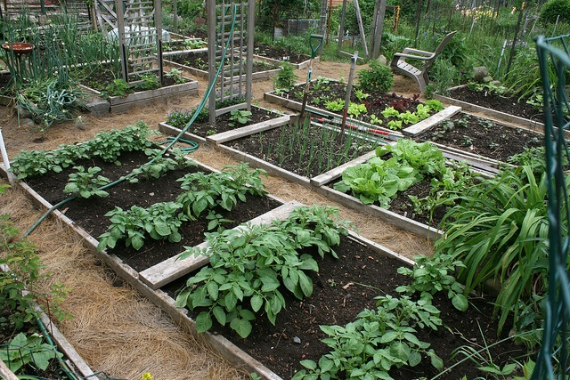 pin by elizabeth riggs on beautiful vegetable gardens