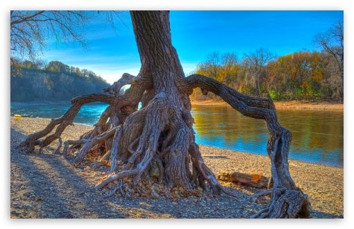 Rooted, Mississippi River at Hidden Falls Park in Saint Paul ...