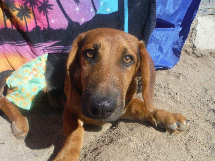Tulare Ca Dog Rescue