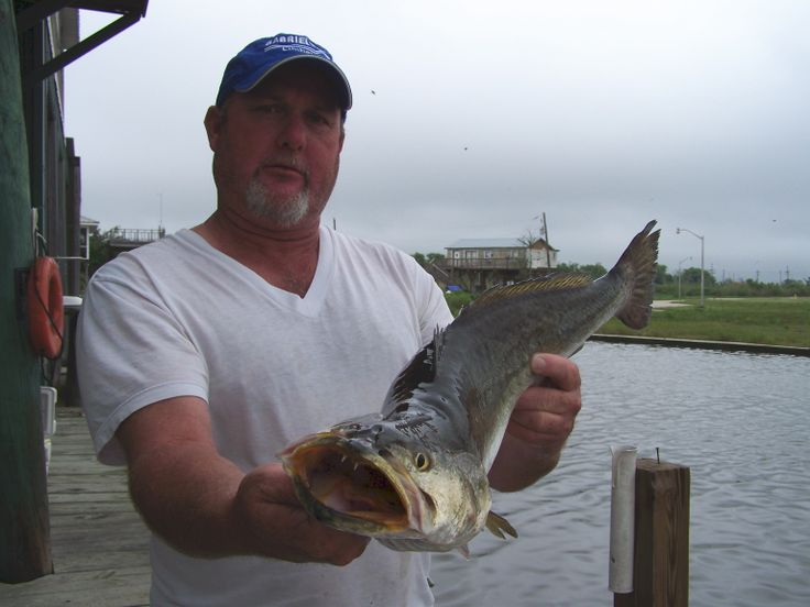 Pin by sea creature fishing charters on louisiana fishing for Louisiana fishing charters