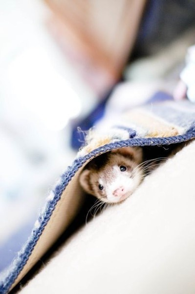 Need a ferret, I have decided they are the cutesy things on the face