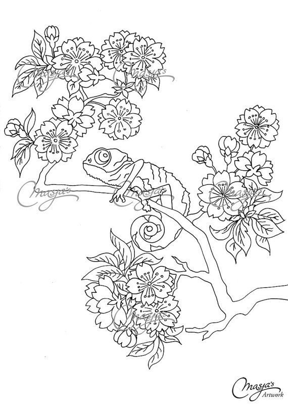 Iguana coloringpage for Green iguana coloring page