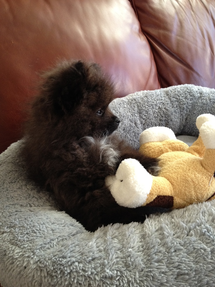 Cash and his cow-cow | Cutest Baby Doggy Ever!!! | Pinterest