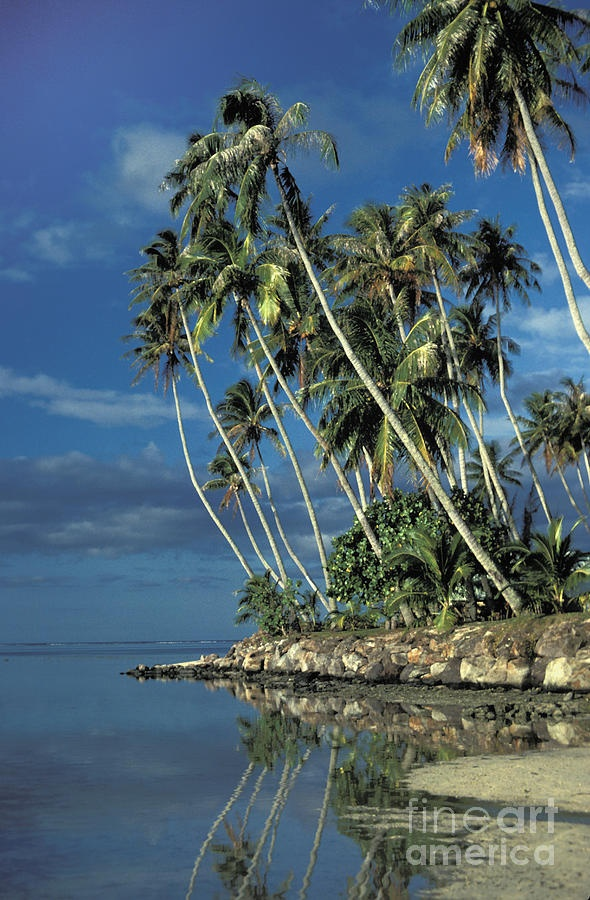 ✮ Palm Trees in Tahiti