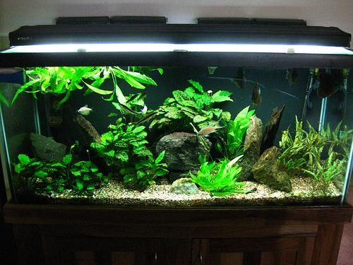 75 gallon aquarium ideas 75 gallon tanganyikan cichlid for 20 gallon fish tank decoration ideas