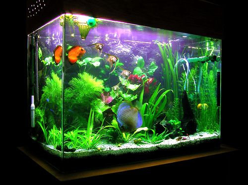 Planning to buy a fish tank aquarium how to choose right for Fish tank sizes
