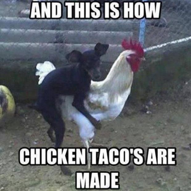 Funny chicken memes - photo#2