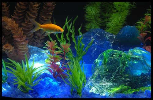 Pin by terry boczar on must love pets pinterest - Glass stones for fish tanks ...