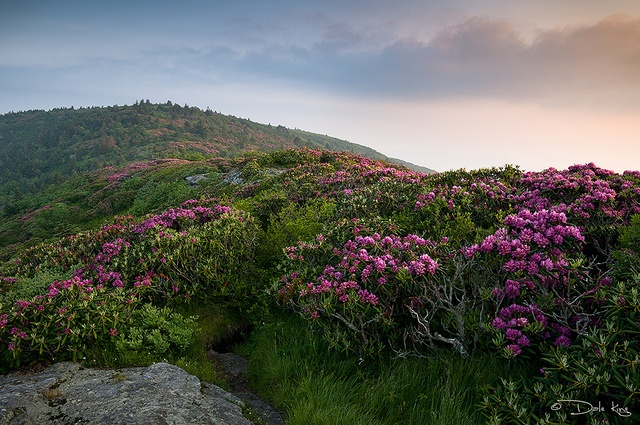 Craggy Gardens Blue Ridge Parkway Some Of My Favorite Places Pin