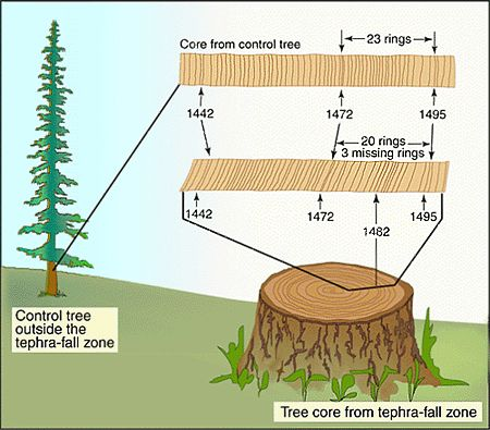 What is the difference between radiocarbon dating and dendrochronology