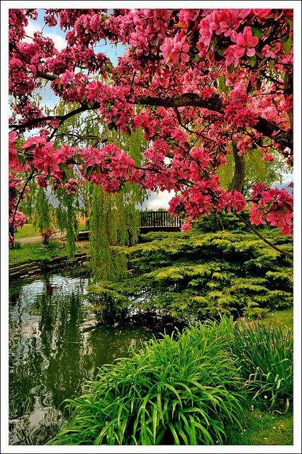 Beautiful Garden Flower Power Pinterest