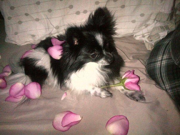 roses on valentine day
