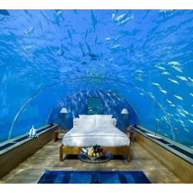Fish tank room fish tanks pinterest for Bedroom fish tank