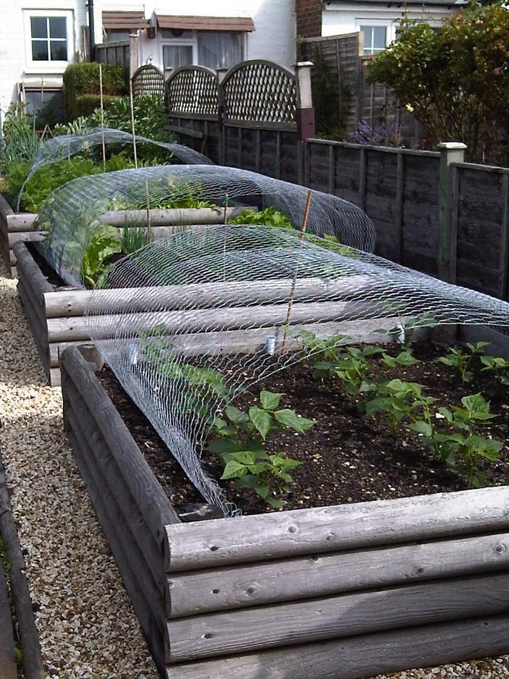 Raised vegetable beds garden pinterest for Raised vegetable garden