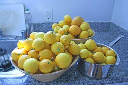 ... , but do try the Meyer Lemon Lemon Drop. Via The Amateur Gourmet