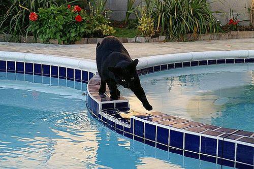 Black Cat Swimming Pool Kitty Black Cat Pinterest