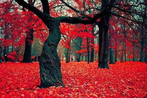 Crimson Forest in Poland