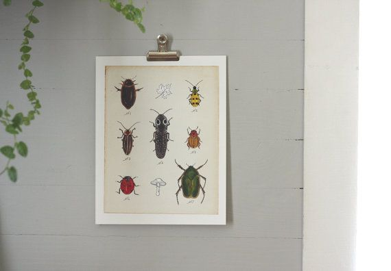 Love, love, love this detail and educational aspect to her work. Beetles Print  Printable PDF by AliceCantrell on Etsy, $4.00