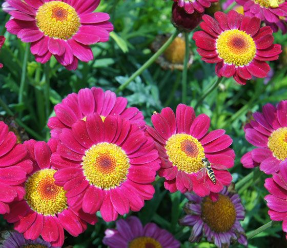 flowers zone 8