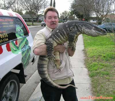 Python Ron