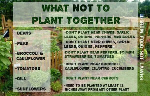 What not to plant together flowers and the garden pinterest - Flowers not to plant with vegetables ...