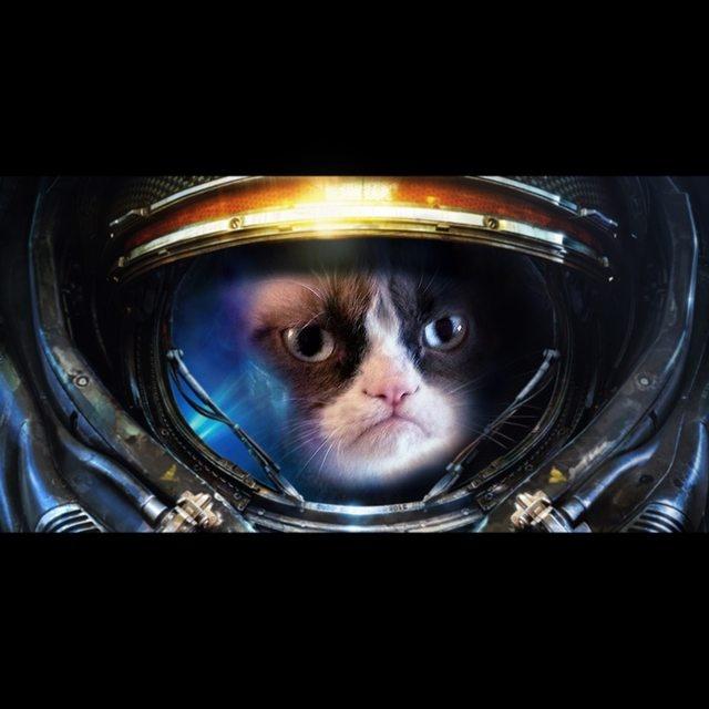 Grumpy Space Cat