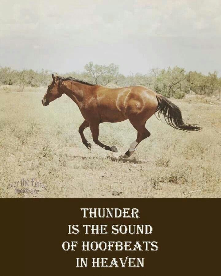 Quotes About Life And Horses. QuotesGram