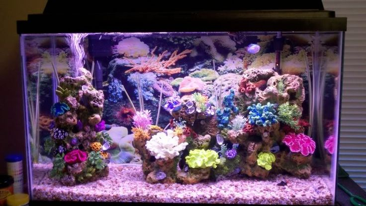 attractive fish tank beautiful fish tanks you 39 re free