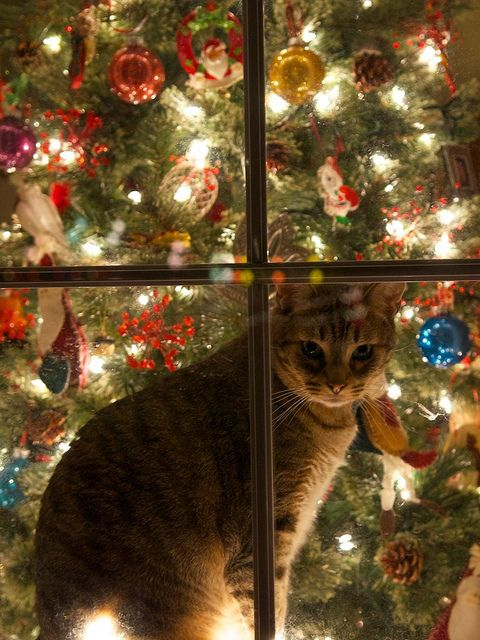 A cat in a christmas window christmas pinterest Christmas tree cat tower