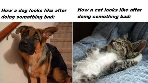 Dog vs Cat | ED_Quotes | Pinterest
