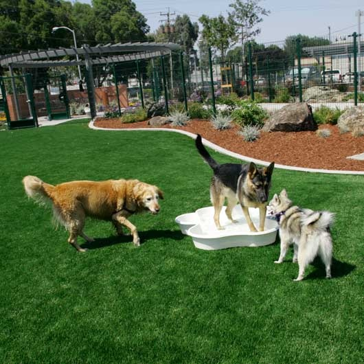Mulch Backyard Dogs : Landscapes