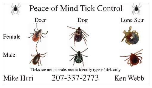 Dog Tick Identification | Dog Breeds Picture