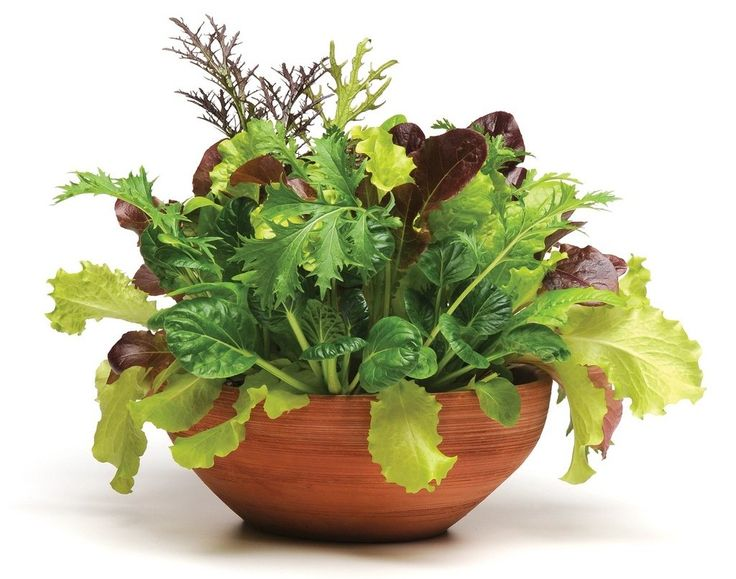 Salad in a planter how my garden grows pinterest - Salads can grow pots eat fresh ...