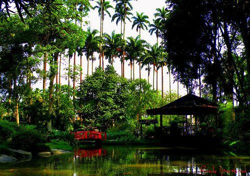 Jardim Botanico  Rio de Janeiro  Jardim Botânico Rio de Janeiro