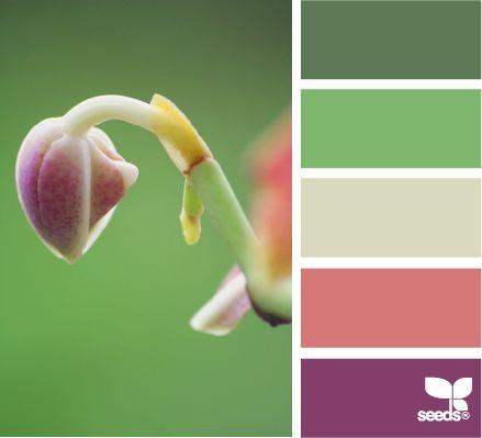 Emerging hues...